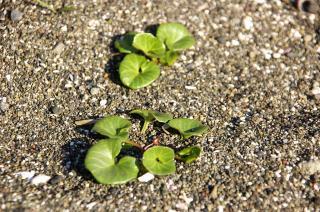 20070318 エビカの浜