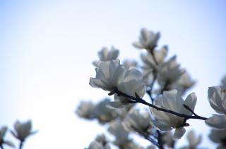 20070323 花の国