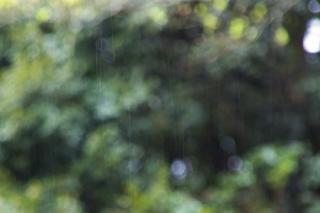20070325 雨