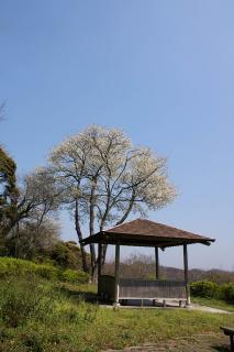 20070328 太田和つつじの丘