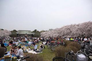 20070401 小金井公園