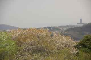 20070402 大楠山