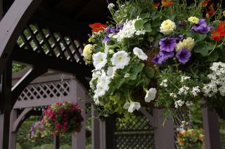 20070424 花の国ハーブ園