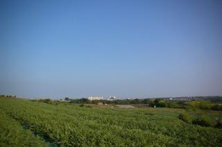 20070611 高円坊 スイカ畑