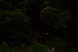 20070613 水間様 蛍