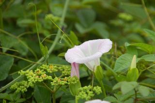 20070626 宮川公園