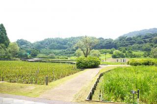 20070726 しょうぶ園