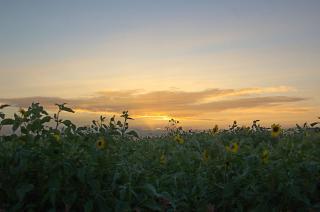 20070813 ソレイユの丘