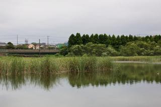 20070818 小松ヶ池
