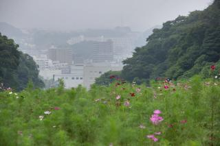 20070830 花の国