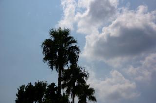 20070902 黒崎の鼻