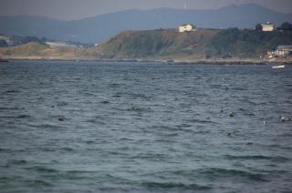 20071015 横堀海岸