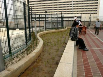 JR大阪駅天空の農園07