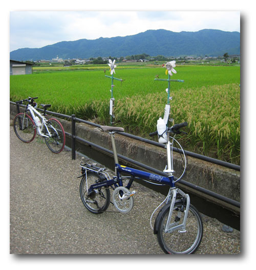 arashiyamaarashi-4.jpg