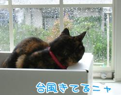 20071027_1.jpg