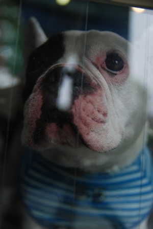 窓越しの桃太郎