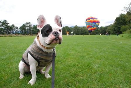 気球に乗れるよ