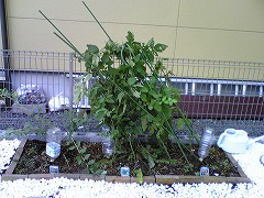 台風被害1