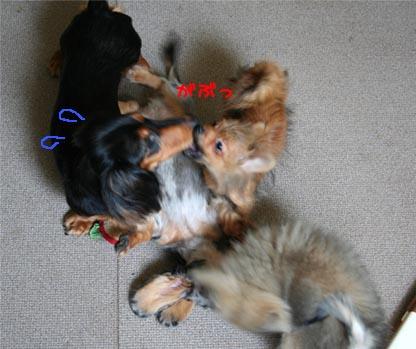 犬たち001