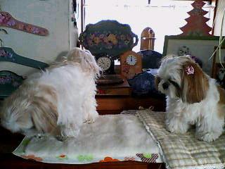 blog12bunmomo.jpg