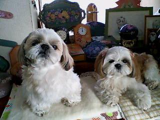 blog12bunmomo4.jpg