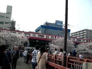 大岡川桜まつり4