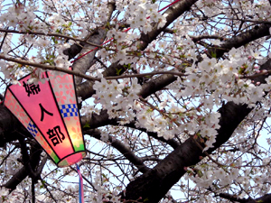 大岡川桜まつり7