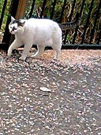 幸ヶ谷公園の猫