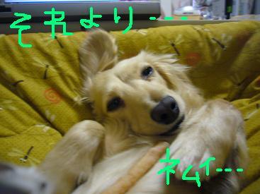 P1020705.jpg