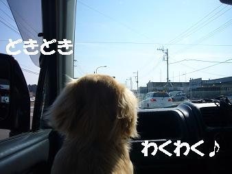P1020775.jpg