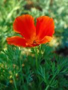 1165932306_Flower1-001.jpg