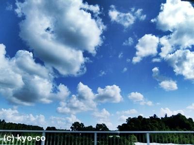 20110805001.jpg