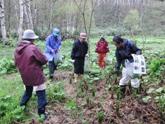 山菜採り開始