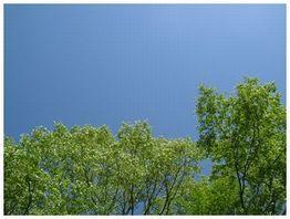 2007_05160012.jpg