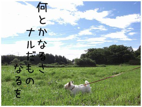 2007_07050016.jpg