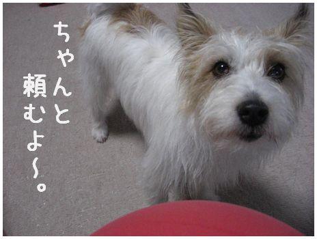 2007_07070050.jpg