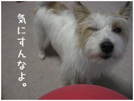 2007_07070051.jpg