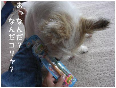 2007_08180011.jpg