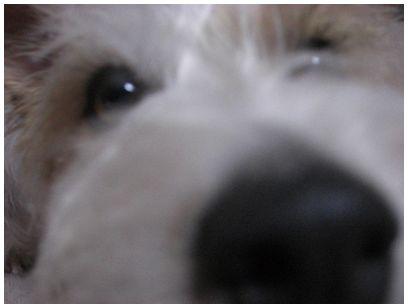 2007_09080029.jpg