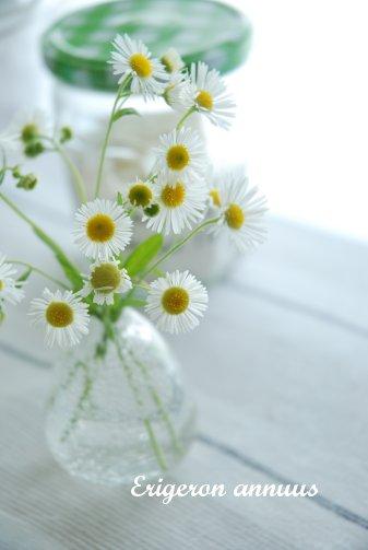 flower14-35.jpg