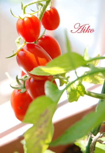 tomato14-8.jpg