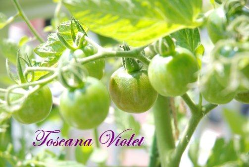 tomato14-9.jpg