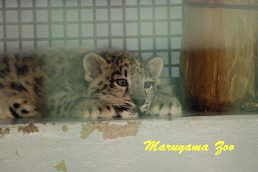 zoo14-1.jpg