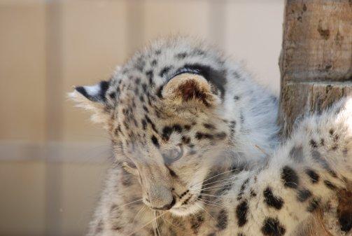 zoo14-11.jpg