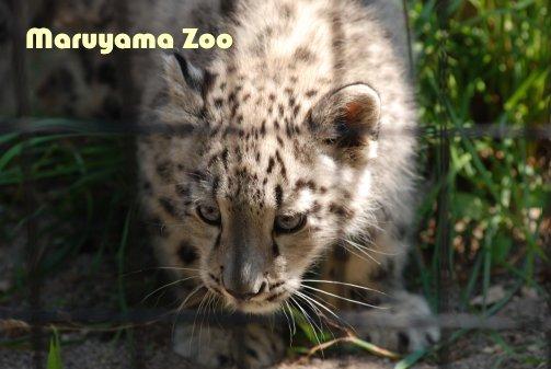 zoo14-12.jpg