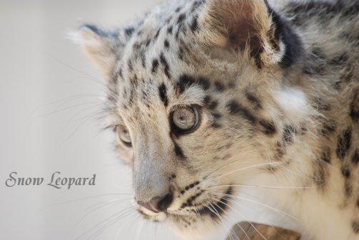 zoo14-13.jpg