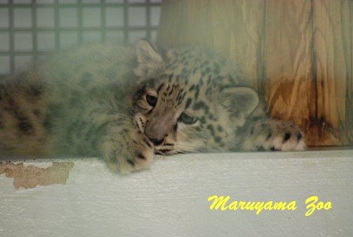 zoo14-2.jpg