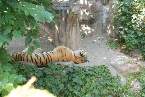 zoo14-21.jpg