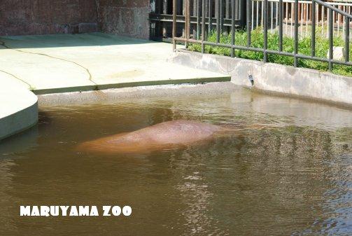 zoo14-22.jpg