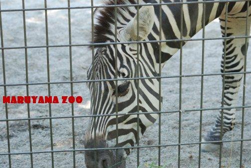 zoo14-23.jpg